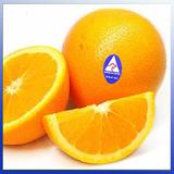 C-橙-Orange-生果-澳洲-新陳代謝-SG-201100-004-D22