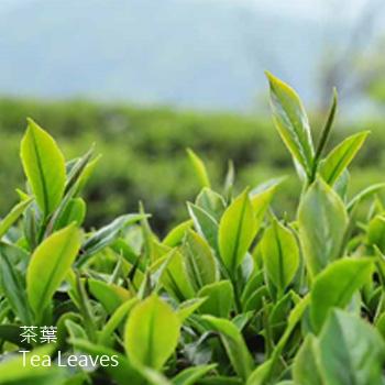 茶葉-CY-Tea Leaves-其它-抗氧化-KTM-204025