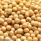 黃豆-WD-(DD大豆)-Soybean-蔬菜-SCC-健康食品-SGL-201128