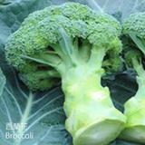 西蘭花-SLF-Broccoli-蔬菜-SCC-健康食品-SGL-201019