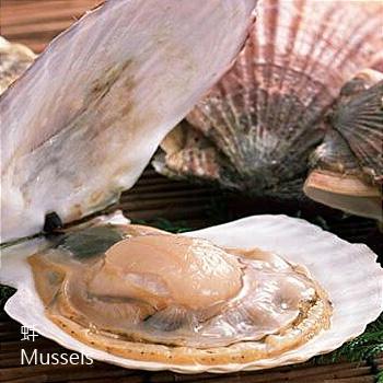 蚌-P-Mussels-水產-滋陰養肝-SCL-202018