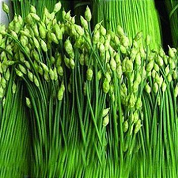 韭菜-KC-Leek-蔬菜-SCC-壯陽-排毒-SGL-201072