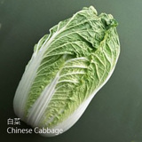 白菜-BC-(WNB黃牙白)-Chinese Cabbage-蔬菜-SCC-抗氧化-SGL-201033
